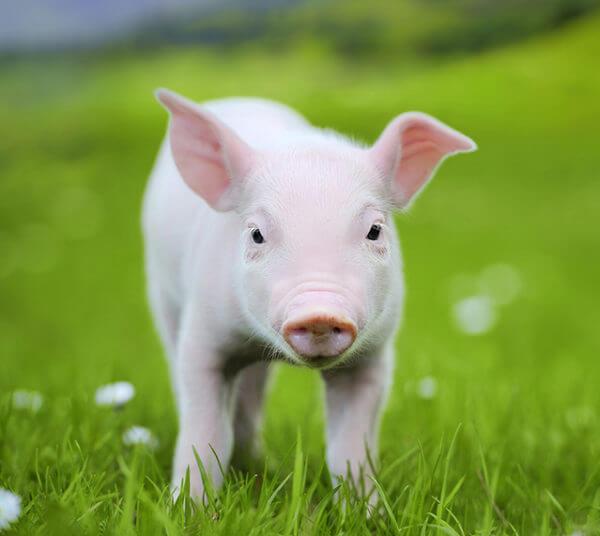 piggy-image