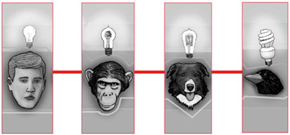animal-intelligence